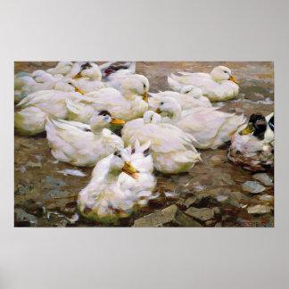 Patos en una charca póster