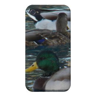 - Patos iPhone 4/4S Carcasas
