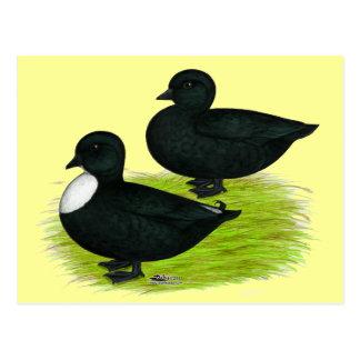 Patos:  Llamadas del negro Tarjeta Postal