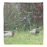 Patos masculinos del pato silvestre bandanas