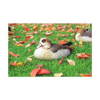 Patos que mienten en hierba impresion en lona