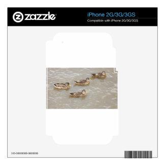 Patos que nadan skins para iPhone 3