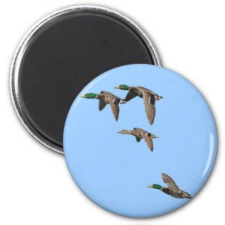 Patos silvestres de la caza del pato en vuelo imán redondo 5 cm