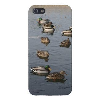 Patos silvestres del invierno iPhone 5 fundas