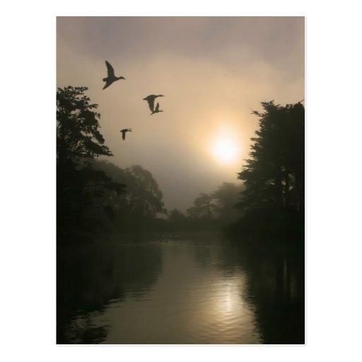 Patos silvestres del vuelo y niebla de la mañana tarjetas postales