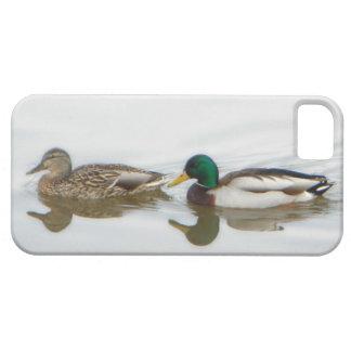 Patos silvestres iPhone 5 carcasas