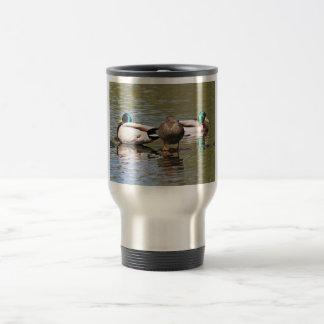 Patos silvestres tazas de café
