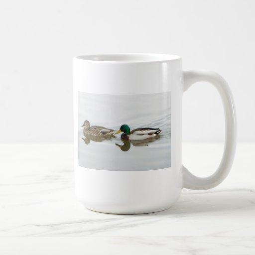 Patos silvestres taza