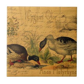 Patos silvestres y collage del cisne azulejo cuadrado pequeño