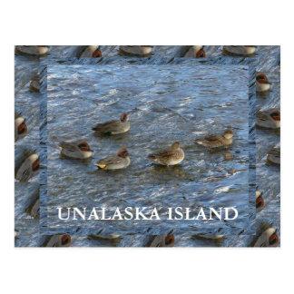 patos Verde-cons alas del trullo, isla de Unalaska Postales