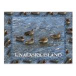 patos Verde-cons alas del trullo, isla de Unalaska Tarjeta Postal