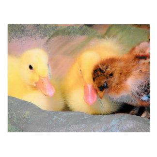 Patos y polluelo del dibujo animado postal