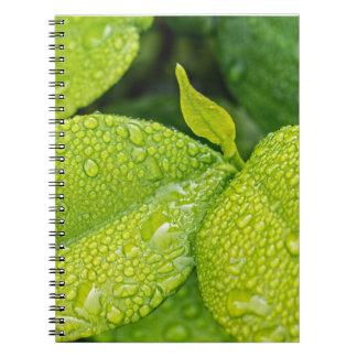 Patriciapotluck green raindrops notebook