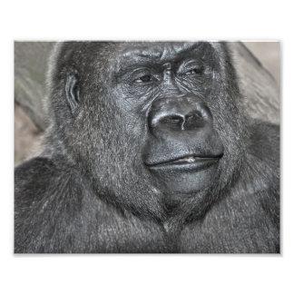 Patrick el gorila cojinete