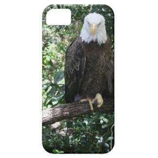 Patriotic American Bald Eagle Wildlife Photo iPhone SE/5/5s Case
