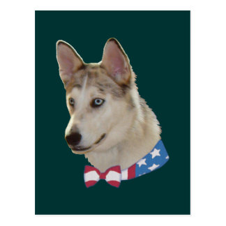 Patriotic Ausky Dog Postcard