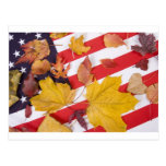 Patriotic Autumn Colors Postcard