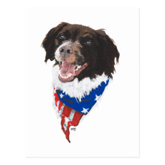 Patriotic Brittany Postcard