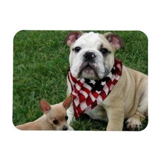 Patriotic bulldog photo magnet