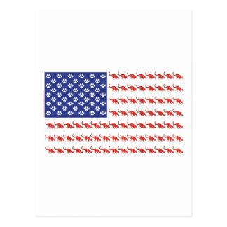 Patriotic Cat/USA Postcard
