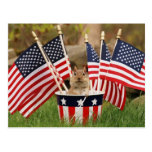 Patriotic Chipmunk Post Cards