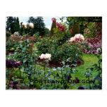 Patriotic Colors Rose Garden Post Card