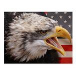 Patriotic Eagle Image Postcard