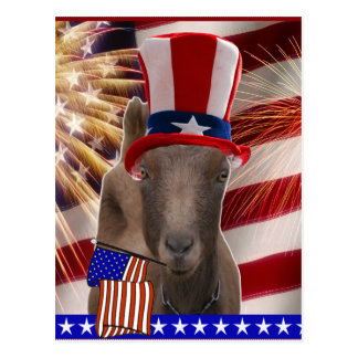 PATRIOTIC GOAT 4th OF JULY GIFTS Postcard
