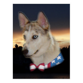Patriotic Husky Dog Sunset Postcard