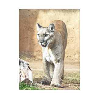 Patrolling Puma Canvas Print