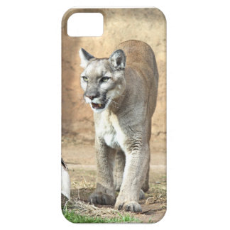 Patrolling Puma iPhone SE/5/5s Case