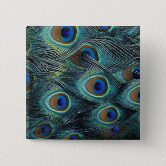 Pattern in male peacock feathers button