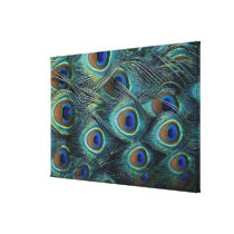 Pattern in male peacock feathers canvas print