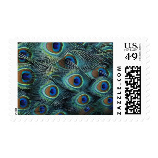 Pattern in male peacock feathers postage stamp