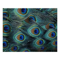 Pattern in male peacock feathers poster
