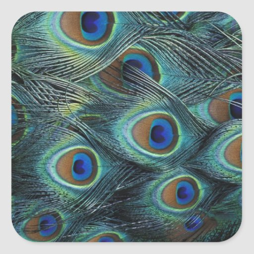 Pattern in male peacock feathers square sticker