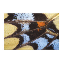 Pattern Of Butterfly Canvas Print