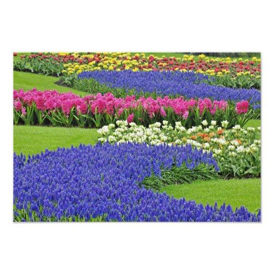 Pattern of Grape Hyacinth, tulips, and 3 Photo Print