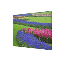 Pattern of Grape Hyacinth, tulips, and Canvas Print