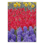 Pattern of hyacinth, tulips, and daffodils, greeting card