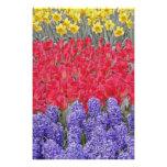 Pattern of hyacinth, tulips, and daffodils, art photo