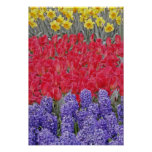 Pattern of hyacinth, tulips, and daffodils, print