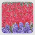 Pattern of hyacinth, tulips, and daffodils, square sticker