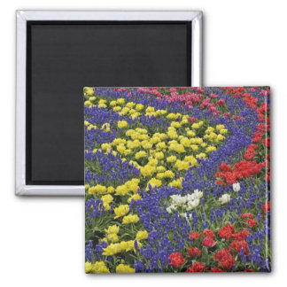 Pattern of tulips and Grape Hyacinth flowers, 2 Fridge Magnet