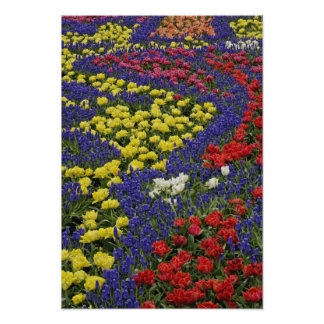 Pattern of tulips and Grape Hyacinth flowers, 2 Poster