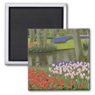 Pattern of tulips and grape hyacinth flowers, magnet