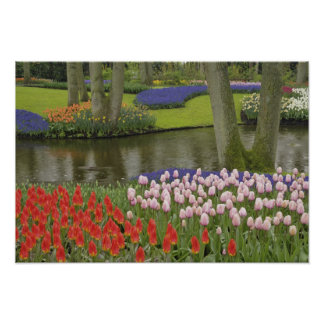 Pattern of tulips and grape hyacinth flowers, poster