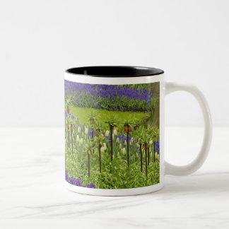 Pattern of tulips hyacinth, and Grape Hyacinth Two-Tone Coffee Mug