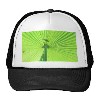 Patterns In Nature Mesh Hat