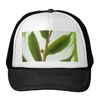 Patterns In Nature Trucker Hat